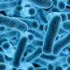 3d Germs