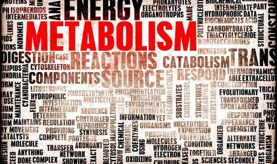 photodune-5718432-metabolism-xs
