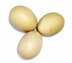 photodune-894883-three-egg-in-isolated--xs