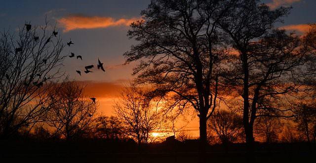 sunrise-274257_640