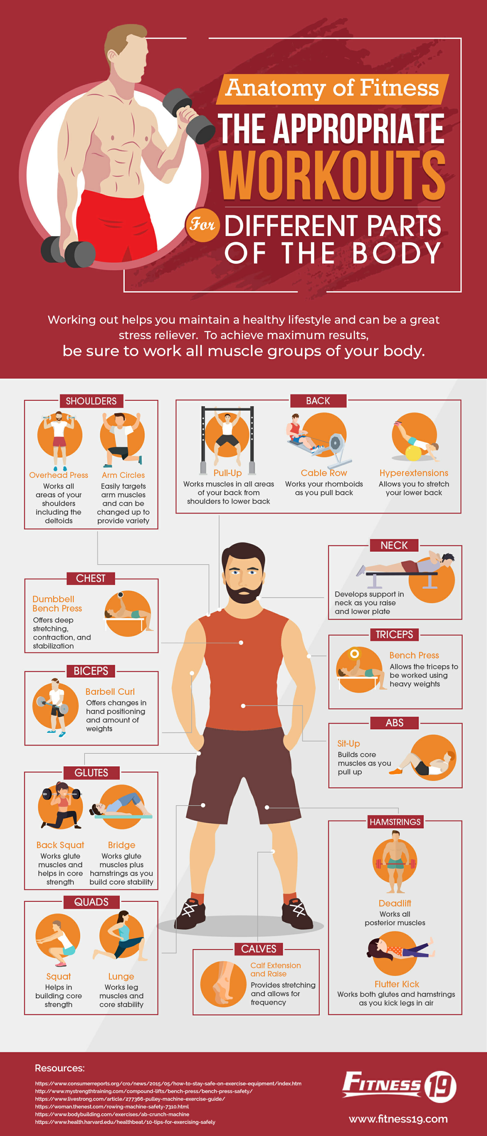 Anatomy Of Fitness The Appropriate Workouts For Different Parts Of
